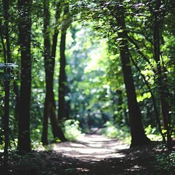 Chemin au cœur de la forêt.