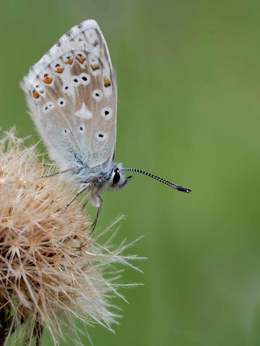 Un papillon posé sur une fleur.