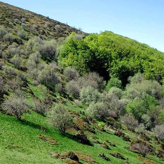 Le Pré de l'âne, l'un des sommets des trois becs de la forêt de Saoû.