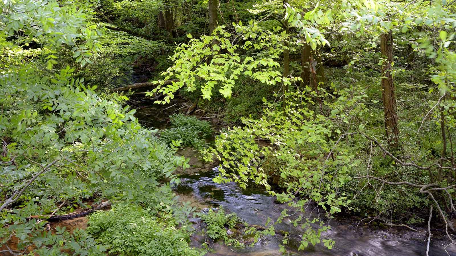 Rivière et végétation verdoyante de la forêt de Saoû.