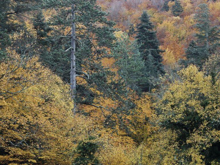 Paysage d'automne autour de l'AUberge des Dauphins - c- Neau